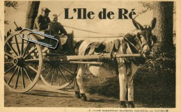 ILE DE RE -17- ANE EN CULOTTE - ATTELAGE - Ile De Ré