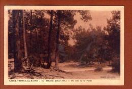 1 Cpa 17. SAINT-TROJAN-LES-BAINS - Ile D' Oléron .- Un Coin De La Forêt - France