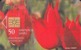 Bulgaria Bulfon C014b Flowers - Tulipa Rhodopaea - Bulgarien