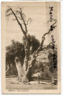 - 722 - Hebron - Palestine - Israël - Oak Of Abraham, Arbre Ancien, Chêne, Non écrite, TBE, Scans.. - Israel