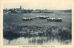 - Morbihan - Ref C456 - Billiers - Paturage De Thora - Mouton - Moutons  - Carte Bon Etat - - France