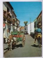 Baudet Donkey / Horse Provincia Alicante Spain - Burros