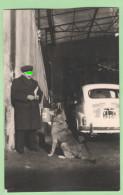 Cani Dog Dogs Chiens Photo - Non Classificati