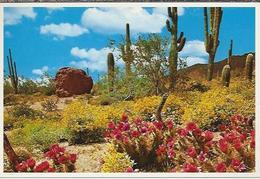 VS.- .Arizona. Spring In The Heart Of Dessertland. 2 Scans. - Cactussen