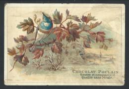 Ancien Chromo Publicitaire - CHOCOLAT POULAIN - Oiseau Bird  // - Poulain
