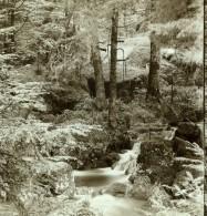 Allemagne Environs De Baden Baden Foret Ancienne Photo Stereoscope Gustav Salzer 1899 - Stereoscopic