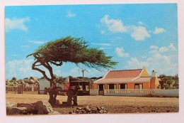 Divi-Divi-Tree With Cunucuhouse, Aruba, Netherland Antilles - Aruba