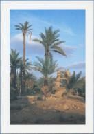 ALGERIE / ALGERIA - Palmeraie De Ghardaïa - M´Zab - Ghardaïa