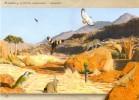 Namibia - 2015 Brandberg Postcard Bokmakiri Cancelled - Vögel