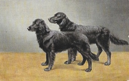 Chien - Couple D'Epagneuls Noir- Illustration Non Signée - Edition K.E. Série 3065 - Carte Non Circulée - Chiens