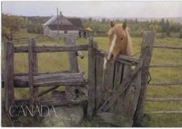 Cpsm  CHEVAL DU CANADA - Horses