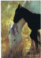 Cpsm  Poulain Et Sa Maman - Horses