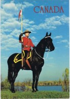 Cpsm  CANADA - Horses
