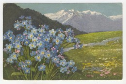 Fleurs De Montagne Par A. Wagnen - Illustrators & Photographers