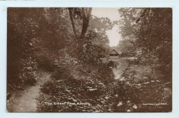 Albury - Silent Pool - Surrey