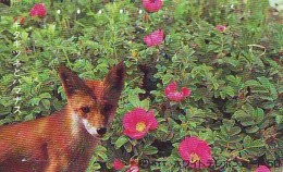 FOX RENARD FUCHS VOS Telecarte (296) - Jungle