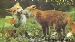 FOX RENARD FUCHS VOS Telecarte (317) - Jungle