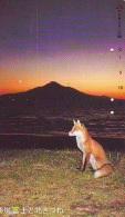 FOX RENARD FUCHS VOS Telecarte (330) - Oerwoud