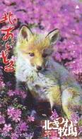 FOX RENARD FUCHS VOS Telecarte (334) - Oerwoud