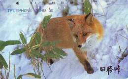 FOX RENARD FUCHS VOS Telecarte (339) - Oerwoud