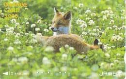 FOX RENARD FUCHS VOS Carte Prepayee (347) - Oerwoud