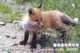 FOX RENARD FUCHS VOS Carte Prepayee (348) - Oerwoud