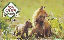 FOX RENARD FUCHS VOS Carte Prepayee (349) - Oerwoud