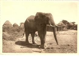 SOMALIA ITALIANA FAUNE AFRICAINE ELEPHANT IN AN OLD VILLAGE  VINTAGE POSTCARD - Elephants