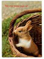 CPSM ANIMAUX LAPIN DANS PANIER - Animaux & Faune
