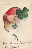 """Pig W/ Shamrock In Mouth , """"The Lucky Pig"""" , PU-1905 TUCK, 00-10s - Cochons"""