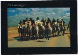 Cpm   La CAMARGUE - Horses