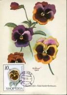 7024 Albania,  Maximum  1959  Flora,  Viola - Albanien