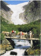 Cpsm    NORGE BRIKSDALSBREEN WEST NORWAY - Horses