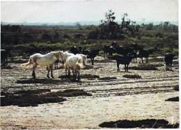 Cpsm   CAMARGUE TAURTEAUX NOIRS ET CHEVAUX BLANCS - Horses