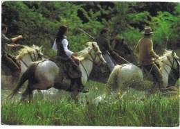 Cpa  PROVENCE EN CAMARGUE - Horses