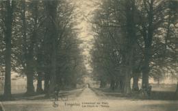 BELGIQUE TONGERLOO / Les Tilleuls De L'Abbaye / - Belgique