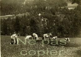 CAUTERETS Un Troupeau Vers 1900 Hautes-Pyrénées 65 - Lieux