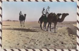 6AI2005 BOUSAADA CITE DU BONHEUR CHAMELIERS DANS LE DESERT 2 SCANS - Alger