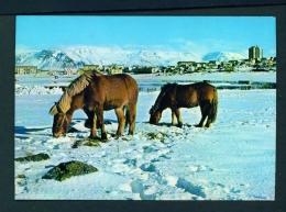 ICELAND  -  Reykjavik  Icelandic Ponies  Unused Postcard - Islande