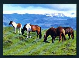 ICELAND  -  Eyjaffjoll  Grazing Ponies  Unused Postcard - Islande