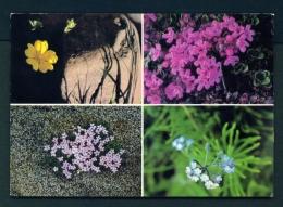 ICELAND  -  Local Wild Flowers  Unused Postcard - Iceland