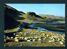 ICELAND  -  Thjorsardalur  Flock Of Sheep  Unused Postcard - Iceland