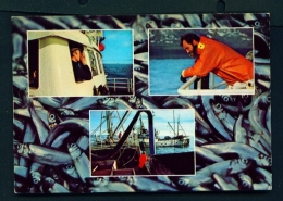 ICELAND  -  Capelin Fishing  Unused Postcard - Iceland