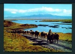 ICELAND  -  Thjorsardalur  Horse Train  Unused Postcard - Iceland
