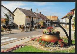 SAINT LAURENT De GRANDVAUX Rare Retour De Paturages (Protet Jura (39) - Altri Comuni