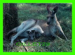 SYDNEY, AUSTRALIA - KANGAROO AND JOEY PHOTOGRAPHED AT KOALA PARK WEST PENNANT HILLS - WRITTEN IN 1995 - - Sydney