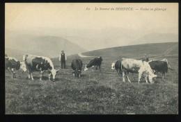 88 Vosges Le Sommet Du Hohneck 52 Vaches Au Paturage Animée - Non Classés