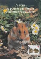 Carte-Maximum BELGIQUE / Animaux De Compagnie - Maximum Cards