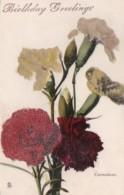 Tucks Carnations Birthday Greetings Flower Series - Tuck, Raphael