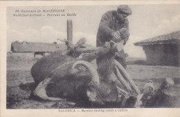Macédoine - Maréchal-ferrant Ferrant Un Buffle (animée, Vieux Métier, 1918) - Macédoine